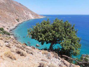 drzewo na tle morza