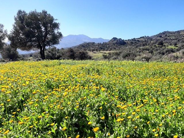 łąka z żółtymi kwiatkami