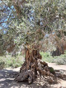 stara oliwka warsztaty dla kobiet