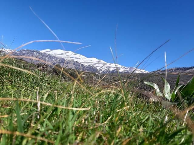 ośnieżony psiloritis widziany znad łąki