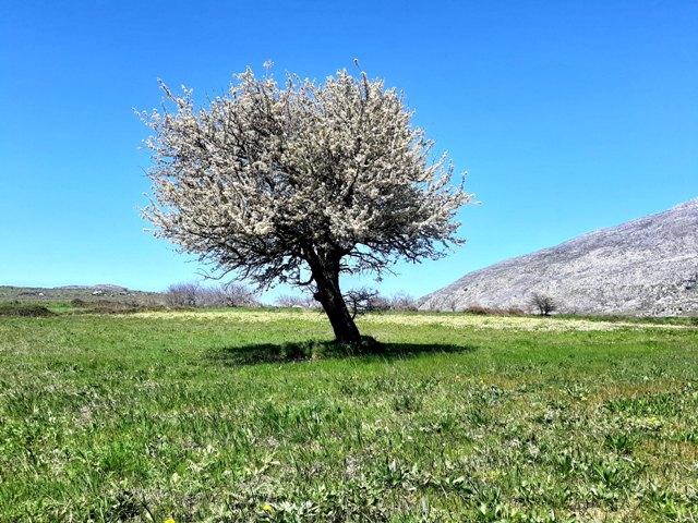 samotne drzewo kwitnące na zielonej trawie